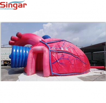 9m(29.5ft) inflatable heart for medical aducation